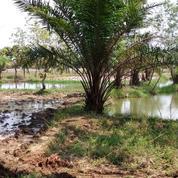 Murah Tanah 2 Ha + Kebun Jati + Bangunan Sarang Walet Di Karawang Timur