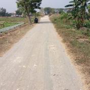 Lahan Tanah Di Daerah Balongpanggang Posisi Nol Jalan Desa Luas 3000 M2 Sertifikat Petok D (21316907) di Kab. Gresik