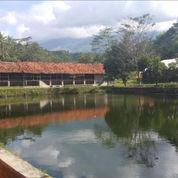 Exs Kandang Ayam Di Daerah Kuningan (21317031) di Kota Cirebon