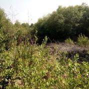 Tanah UNDER 1M Di Graha GAT Barat Depan Perum Taman Gunung Anyar (21330483) di Kota Surabaya