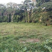 Tanah Murah Hanya 250rbu/M Seluas 6.270 Meter Persegi (21332287) di Kota Tomohon