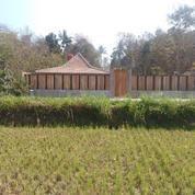 Villa Dekat Kawasan Wisata Kasongan Dengan View Sawah Dan Bukit Yogyakarta (21381387) di Kab. Bantul