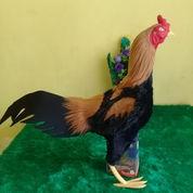 Boneka Ayam Bulu Kain