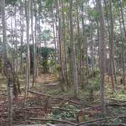 Tanah Murah Plus Kayu Sengon Lokasi Pinggir Jalan Di Malang
