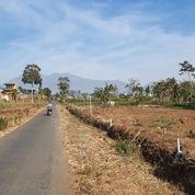 Progres Tanah Kavling Syariah Bunton Malang Padat Penduduk (21619839) di Kab. Malang