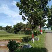 Tanah Sawah 4425 M2 Pinggir Jalan Kawasan Villa Di Darangdan Purwakarta