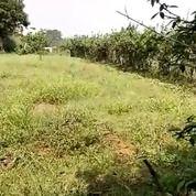Tanah Strategis Lokasi Curug Induk Parung Jambu Bogor (21712467) di Kota Depok