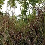 Tanah Murah . Seluas 2,2 Hektar (21720907) di Kota Samarinda