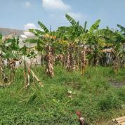 Tanah Murah Di Cikarang (21913339) di Kota Bekasi