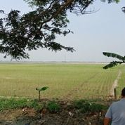 Sawah Daerah Tambelang Bekasi (21923467) di Kota Bekasi