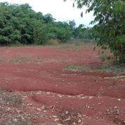 Tanah 5000 M2 Cocok Untuk Perumahan Cluster Di Cibening Purwakarta Kota (22043579) di Kab. Purwakarta