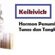 Hormon Keikivick Penumbuh Tunas Dan Bunga (22071951) di Kota Malang