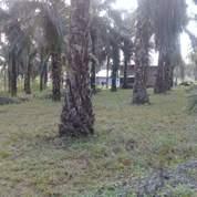 Tanah Luas 3 Ha Dekat Kota, Dekat Sekolah SMA N 1 Bagan Batu, Rokan Hillir (22094723) di Kab. Rokan Hilir