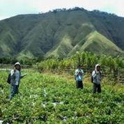Tanah Di Sembalun Dkt Sircuit MotoGP Mandalika Lombok (22101679) di Cisarua