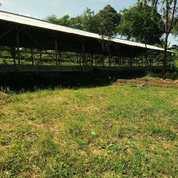 Kandang Buat Proyek Ayam Di Megamendung Bogor (22113151) di Cisarua