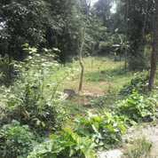 Tanah 800m2 Murah Pinggir Jalan Desa Di Cipulus Nagrog Wanayasa Purwakarta