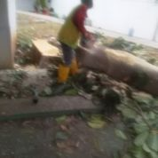 Tukang Potong Pohon Jakarta Barat (22269027) di Kota Jakarta Barat