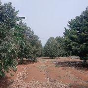 Tanah Murah Cocok Untuk Investasi..Tanah Udah Ada Rumah Dan Kebun Durian (22272355) di Kota Bogor