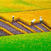 Lukisan Happy Harvest (22284671) di Kota Denpasar