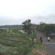 Investasi Tanah Sawah Produktif Di Kabupaten Semarang (22298075) di Kota Semarang