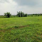 STRATEGIS Tanah SHM SANGAT LUAS Di Wonokerto Jember Rp500rb/Mtr NEGO