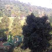 Tanah Kebun Manggis & Sawah 9600 M2 Di WAnayasa Purwakarta