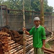 Bambu Jepang Berbagai Ukuran