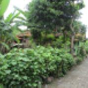 Tanah Murah Shm Di Sumurpanggang Margadana Kota Tegal