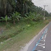 Lahan SHM Jln Lintas Petapahan - Garudasakti Km 25 (22540919) di Kab. Kampar