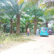 Tanah 4 Hektar Kutai Kertanegara Kalimantan Timur (22602995) di Kab. Kutai Kartanegara