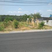 Kavling Di Utara Jl Jogja-Solo, Angsur 12X NON Bunga