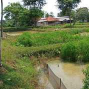 Tanah Empang Strategis Lokasi Babakan Ciseeng Bogor (22661103) di Kab. Bogor