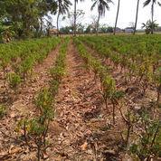 Tanah Kavling Seharga Angsuran Motor Di Babelan Bekasi Utara (22675207) di Kab. Bekasi