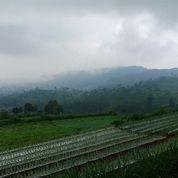 Tanah Cocok Dibangun Villa Kemuning, Ngargoyoso, Karanganyar