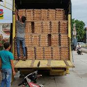 Supplier Telur Ayam Fresh (22767415) di Kota Surabaya