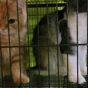 Borongan 2 Kucing + 1 Kandang Besar (22892503) di Kota Bogor