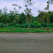 Kebun Durian 1 Hektar Karangpandan, Karanganyar