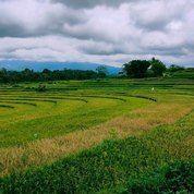 Tanah 1,2 Ha Cocok Kebun Buah/Ponpes Karangpandan Karanganyar