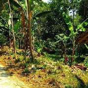 Murah Kebun Di Wanayasa Ada Pohon Manggis Dan Durian Luas 1500 M2 (23110031) di Kab. Purwakarta