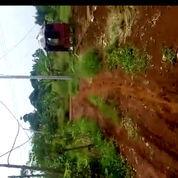 LARIS Tanah (HGU) Tanah Garapan 2,5 Hektar.Utk Perkebunan Dan Perternakan Ditepi Jalan Beton.
