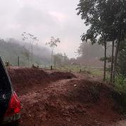 Tanah Kebun Subur SHM (23422471) di Kab. Sumedang