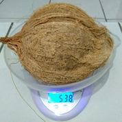 Grosir Kelapa Tua Ukuran Kecil (23499491) di Kab. Tangerang
