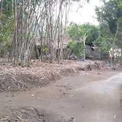 Tanah Murah Winong Terima SHM (23503939) di Kab. Purworejo