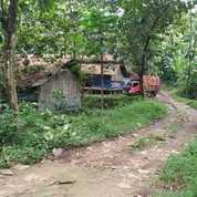 Tanah Bisa Perizinan Peternakan Kandang Ayam Lokasi Pabuaran Kemang Bogor (23537651) di Kab. Bogor