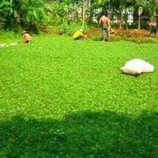tukang rumput tangerang,serpong (2353943) di Serpong