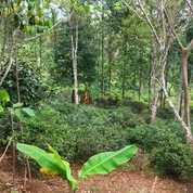 Kebun Murah 1600 M2 Omset Menguntungkan Daerah DIngin Purwakarta (23615527) di Kab. Purwakarta