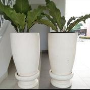 Pot Tanaman Pedestal