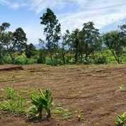 Tanah Kavling Kota Batu Malang (23692723) di Kota Batu