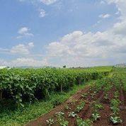 Lokasi Cocok Hunian Segera Milikilah Tanah Kavling Siap Bangun Tanah Cangkuang