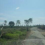 Tanah 2,5 Ha Pinggir Jalan Cocok Untuk Pabrik / Gudang / Peternakan